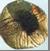 Billeder fra artikel om Hessel Bro 1340 (5)